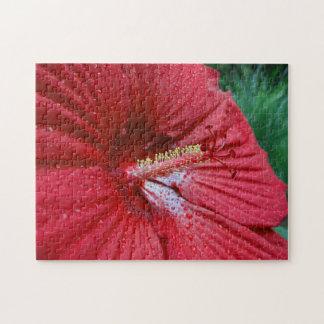 Hibisco rojo con las gotas de agua puzzles con fotos