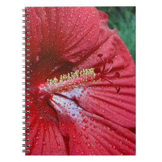 Hibisco rojo con las gotas de agua spiral notebook