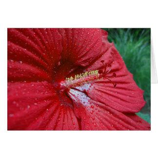 Hibisco rojo con las gotas de agua tarjeta de felicitación