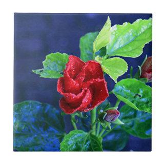 Hibisco rojo después de la lluvia azulejo cuadrado pequeño