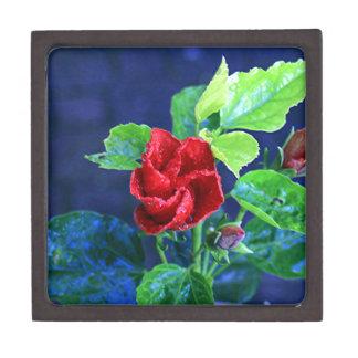 Hibisco rojo después de la lluvia cajas de regalo de calidad