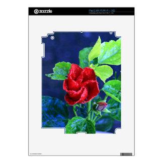 Hibisco rojo después de la lluvia calcomanías para el iPad 2