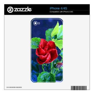 Hibisco rojo después de la lluvia calcomanías para el iPhone 4S