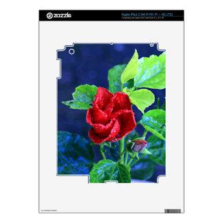 Hibisco rojo después de la lluvia iPad 3 pegatina skin