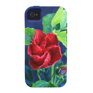 Hibisco rojo después de la lluvia iPhone 4/4S fundas