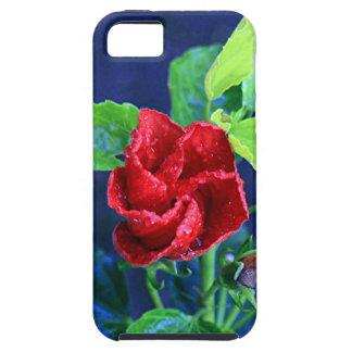 Hibisco rojo después de la lluvia iPhone 5 carcasas