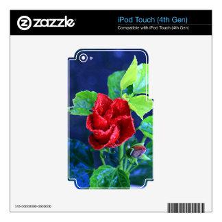 Hibisco rojo después de la lluvia iPod touch 4G calcomanías
