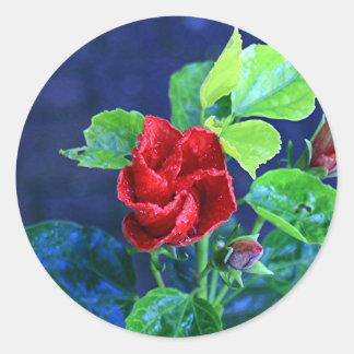 Hibisco rojo después de la lluvia pegatina redonda