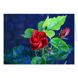Hibisco rojo después de la lluvia tarjeta de felicitación