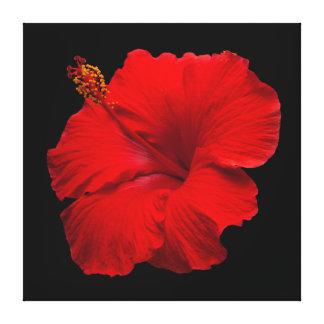 Hibisco rojo en el negro - plantilla modificada impresion en lona