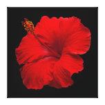 Hibisco rojo en el negro - plantilla modificada pa impresiones en lona estiradas