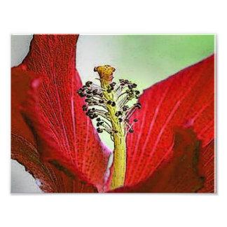 Hibisco rojo fotografías