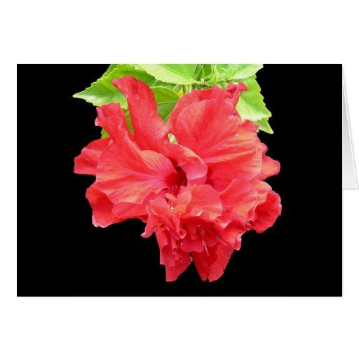 Hibisco rojo glorioso en tarjeta de nota negra