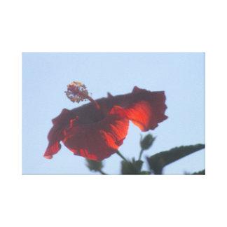 Hibisco rojo grabado en relieve, fuego crepuscular lona estirada galerías