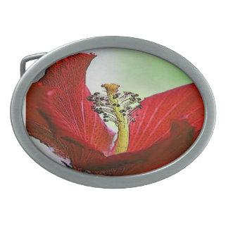 Hibisco rojo hebilla cinturon oval