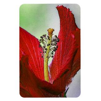 Hibisco rojo iman de vinilo