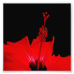 Hibisco rojo impresion fotografica