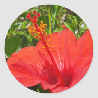 Hibisco rojo pegatina redonda