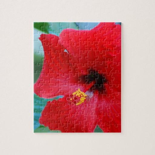 Hibisco rojo puzzle con fotos
