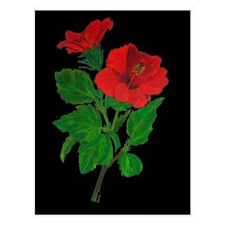 Hibisco rojo postales