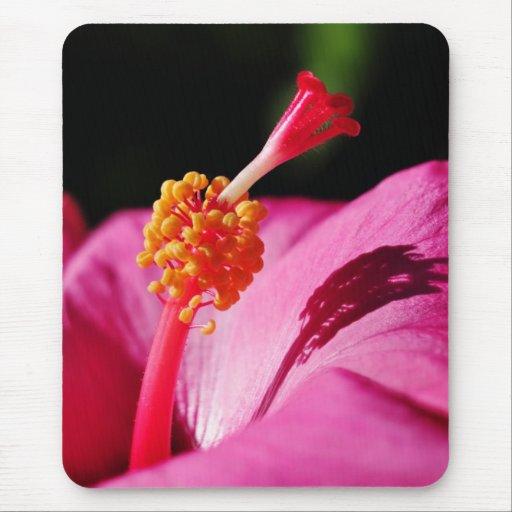 Hibisco Rosa-sinensis - primer de un hibisco Tapete De Ratones
