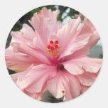 Hibisco rosado doble 1 pegatinas redondas