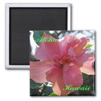 Hibisco rosado en Hawaii Imán Cuadrado