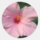 Hibisco rosado etiqueta redonda