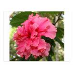 Hibisco rosado postal