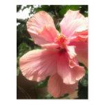 Hibisco rosado que brilla intensamente 1 tarjeta postal
