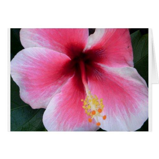 Hibisco rosado tarjetas