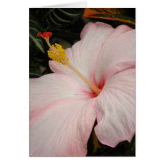 Hibisco rosado Travis Murdock 2006 Tarjeta De Felicitación