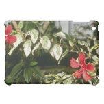 Hibisco Rosasinensis 'Cooperi