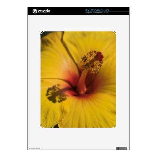 Hibisco Skin Para El iPad
