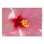 hibiscus 2 greeting cards