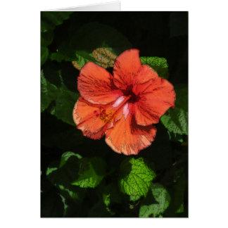 Hibiscus 424 card