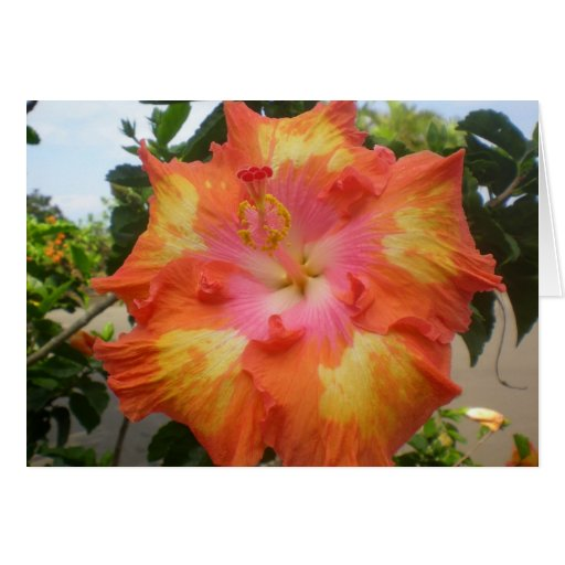 Hibiscus All Aglow Notecard Card