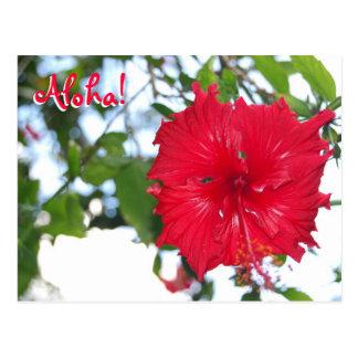 Hibiscus at Waimea Audubon - Hawaii Postcard