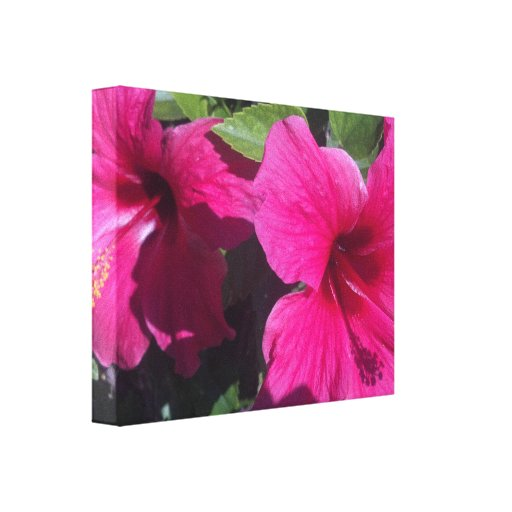Hibiscus b Pink Beautiful Wrapped Canvas Gallery Wrapped Canvas