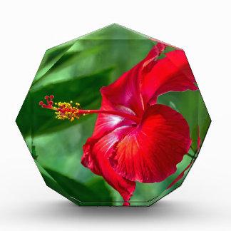 Hibiscus Blossom Award