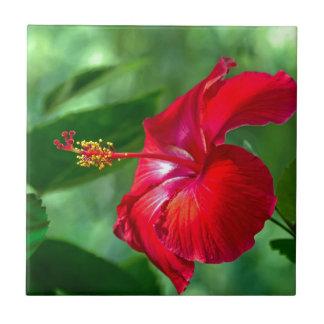 Hibiscus Blossom Ceramic Tile