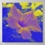 Hibiscus - blue-yellow - print