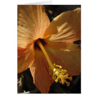 "Hibiscus ""Cairo"" Blank Card"