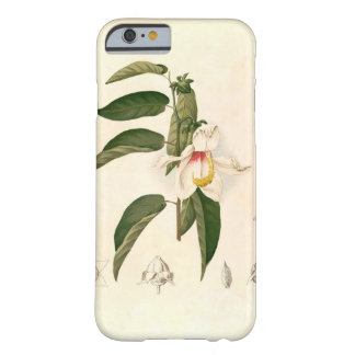 'Hibiscus campylosiphon', c. 1880 Barely There iPhone 6 Case