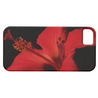 Hibiscus Detail iPhone SE/5/5s Case