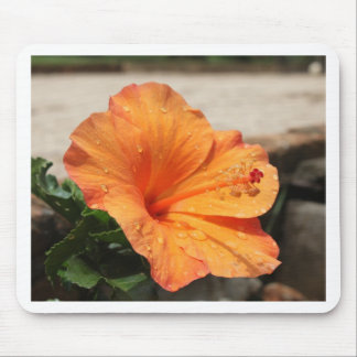 Hibiscus - Diversos Mouse Pad