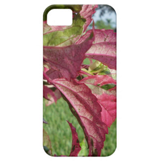"""Hibiscus """"Fire and Ice"""" Plant iPhone SE/5/5s Case"""