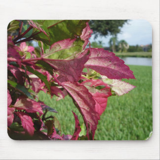 """Hibiscus """"Fire and Ice"""" Plant Mouse Pad"""