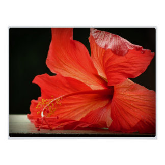Hibiscus Flor papo Posters