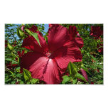 Hibiscus Flower and Blue Sky Summer Nature Photo